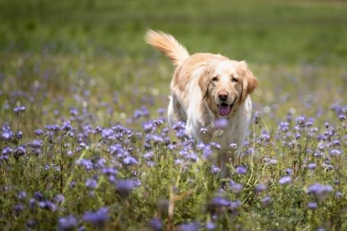 In der Blumenwiese toben 8