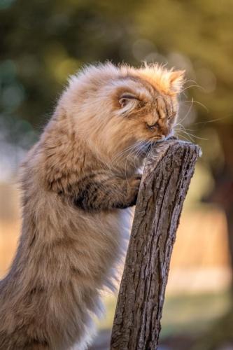 Katzenshooting